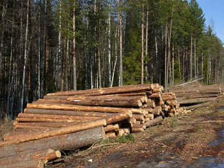 selective logging services in anacortes wa