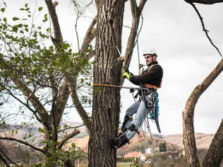 tree pruning in anacortes wa